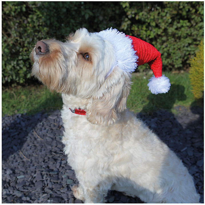 <p>A perfect little Santa hat for your perfict 'lil buddy.</p><p>£3.99 John Lewis</p>