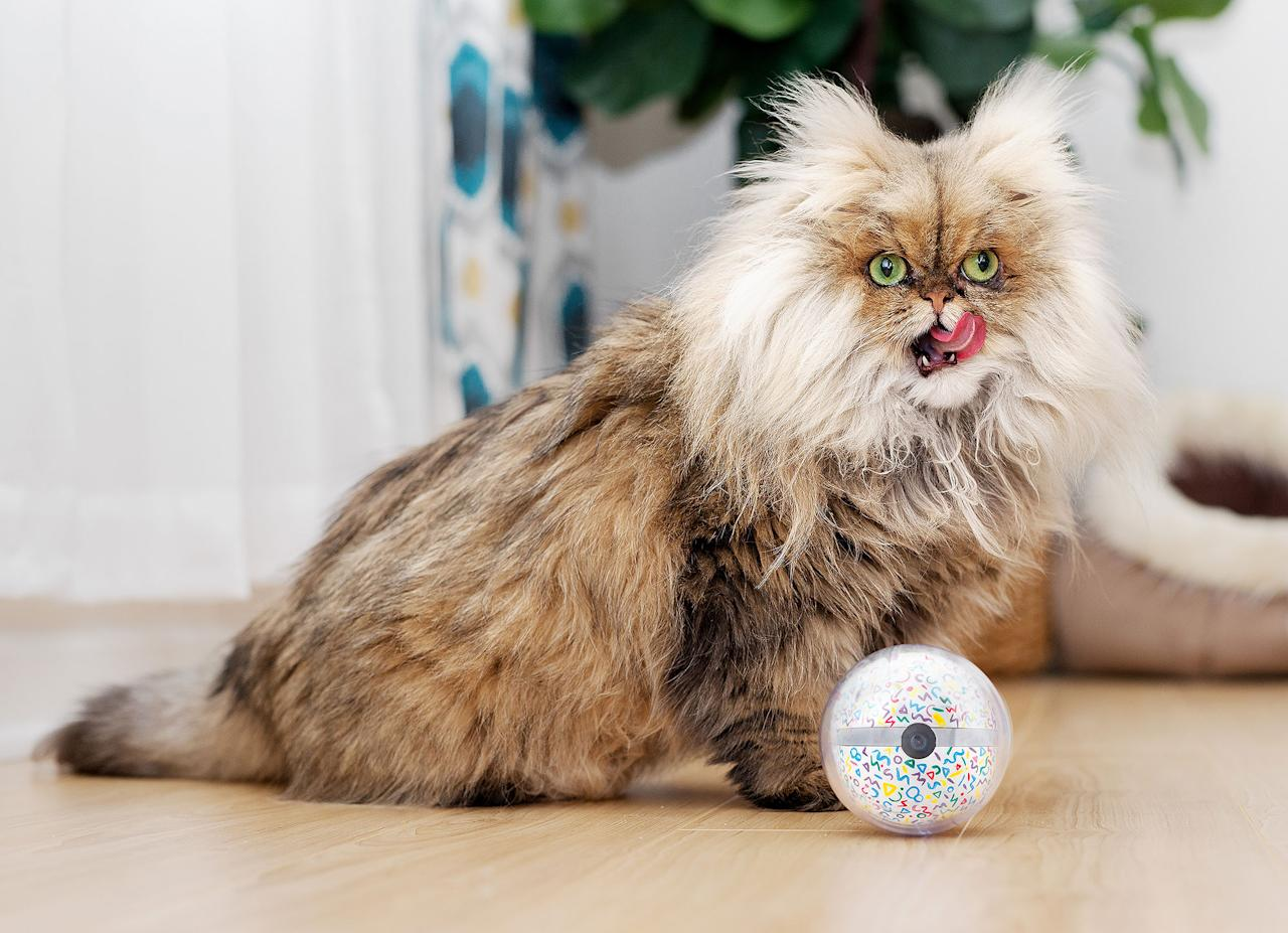 """<p>This product, which was recently financed through Kickstarter, provides pet owners with peace of mind. This little ball tracks activity, keeps your pet moving, allows you to look in on your animal when your away and more! <strong>Buy it!</strong> Pebby Smart Ball; $169; <a rel=""""nofollow"""">kickstarter.com</a></p>"""