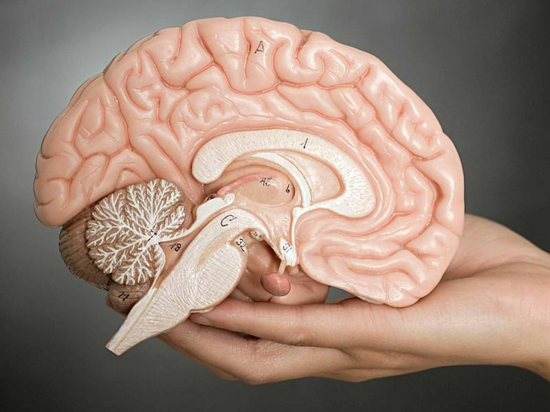 The human brain could be organised in a subtly different way than previously thought: Alamy