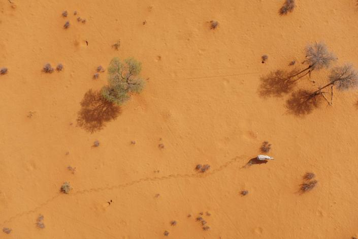 A black rhino in Namibia, as seen from a specially designed drone. Technology like this could help researchers and authorities keep track of threatened species | Wildtrack