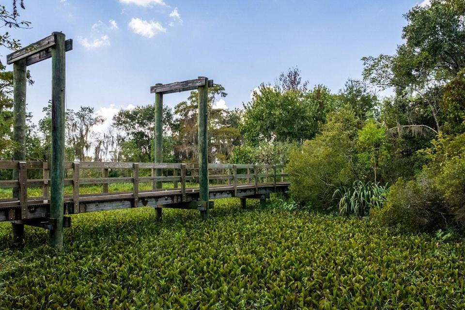 """<p>Only 25 minutes from New Orleans, you'll discover a whole new world at the <a href=""""https://www.tripadvisor.com/Attraction_Review-g60864-d210266-Reviews-Jean_Lafitte_National_Historical_Park_and_Preserve-New_Orleans_Louisiana.html"""" rel=""""nofollow noopener"""" target=""""_blank"""" data-ylk=""""slk:Jean Lafitte National Historical Park and Preserve"""" class=""""link rapid-noclick-resp"""">Jean Lafitte National Historical Park and Preserve</a>. If you've ever wanted to visit a real-deal bayou filled with alligators, armadillos, and other swamp wildlife (viewed from wood-plank trails), this is your chance.</p><p><br><a class=""""link rapid-noclick-resp"""" href=""""https://go.redirectingat.com?id=74968X1596630&url=https%3A%2F%2Fwww.tripadvisor.com%2FAttraction_Review-g60864-d210266-Reviews-Jean_Lafitte_National_Historical_Park_and_Preserve-New_Orleans_Louisiana.html&sref=https%3A%2F%2Fwww.countryliving.com%2Flife%2Ftravel%2Fg24487731%2Fbest-hikes-in-the-us%2F"""" rel=""""nofollow noopener"""" target=""""_blank"""" data-ylk=""""slk:PLAN YOUR HIKE"""">PLAN YOUR HIKE</a></p>"""
