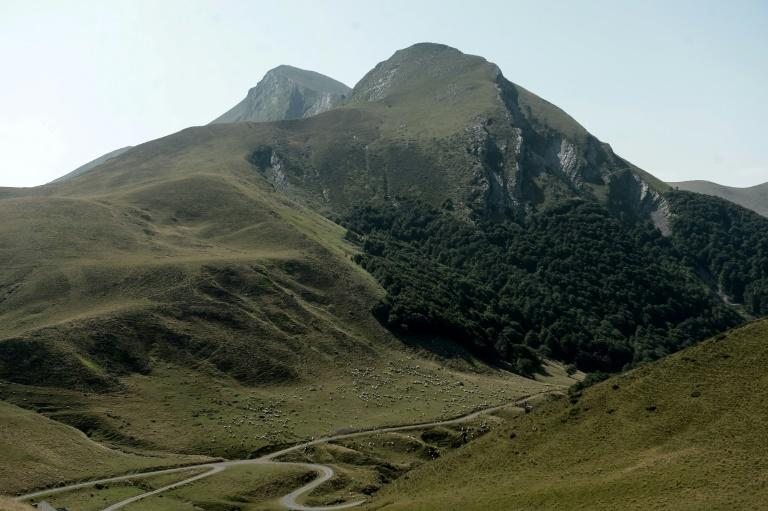 Around 50 brown bears live on the French side of the Pyrenees