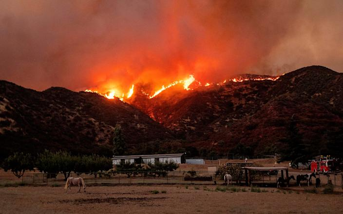 Horses graze as flames from the Apple Fire skirt a ridge in a residential area of Banning, California, on Aug. 1, 2020.