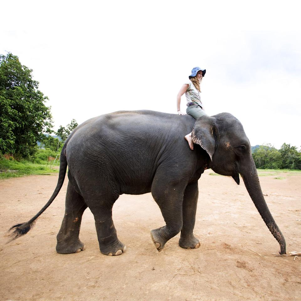 <p>* Make sure to research the place that is renting the elephants out to ensure the safety, health, and happiness of the animals before you ride!</p>