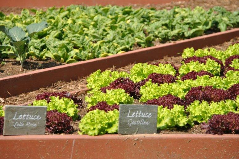 10 Surprising Facts About The White House Vegetable Garden
