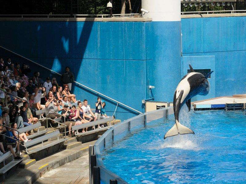 SeaWorld files to go public with $100m IPO