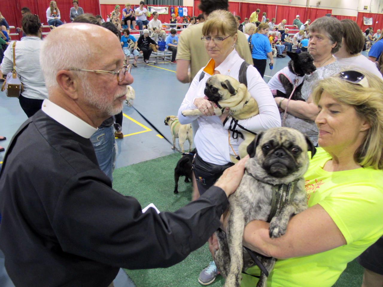 In this May 19, 2013, photo Father John Allen blesses Chip, who is being held by Lisa Erdmann, at Milwaukee Pug Fest in Franklin, Wis. The annual event, that helps pay for medical and dental bills for rescued pugs, attracted more than 1,700 pugs and other smushy-faced dogs along with 2,900 humans from the U.S. and Canada.  (AP Photo/Carrie Antlfinger)
