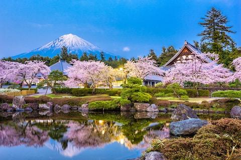 Japan is proving popular, and solo escorted tours continue to blossom - Credit: istock