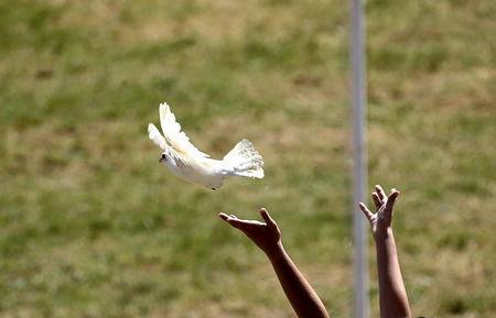 A priestess releases a dove inside the ancient Olympic Stadium during the dress rehearsal for the Olympic flame lighting ceremony for the Rio 2016 Olympic Games at the site of ancient Olympia in Greece, April 20, 2016. REUTERS/Yannis Behrakis