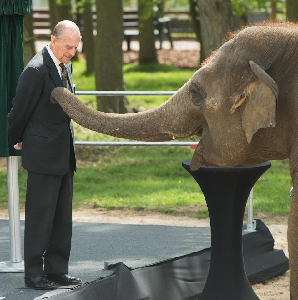 <p>The Duke of Edinburgh feeds Donna, a 7 year old Asian elephant, a banana during a visit to open a new centre for elephant care at ZSL Whipsnade Zoo in Bedfordshire. (Photo credit: <span>Anwar Hussein | EMPICS Entertainment</span>) </p>