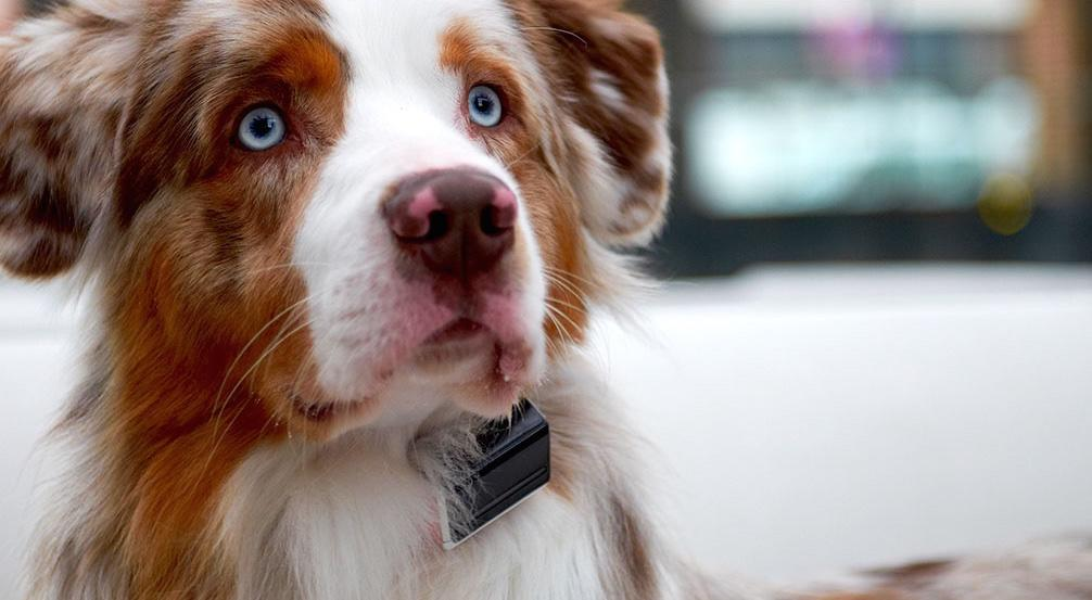 <p>This clever illuminated collar claims to be able to detect your dog's mood, and features pain, stress, and even barking detection. It also features sleep and movement tracking. (Jagger & Lewis) </p>