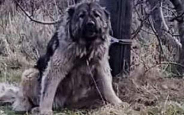 The dog had been left tied to a telegraph pole in cold and wet conditions
