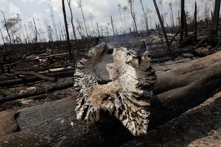 A burning tract of Amazon jungle is pictured in Porto Velho