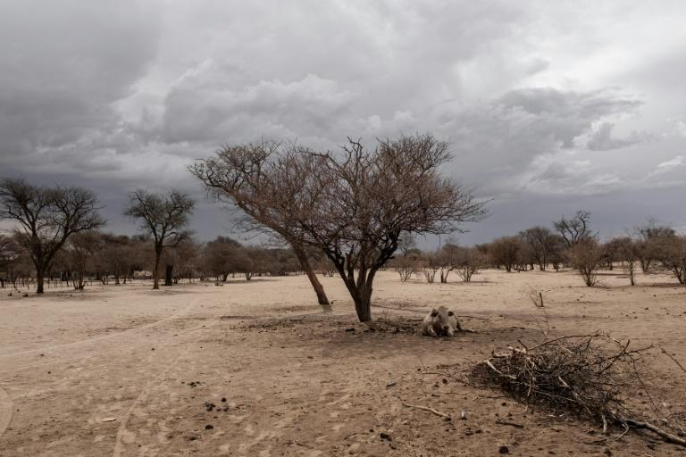 Namibia's government is impatient with the slow pace of land redistribution (AFP Photo/GIANLUIGI GUERCIA)