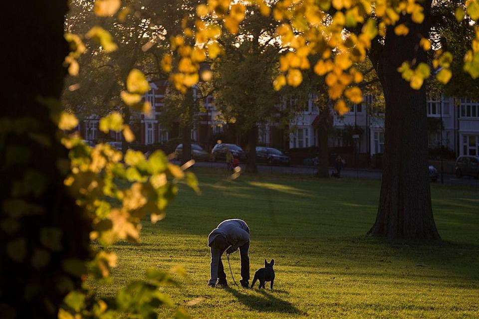 A dog owner has been fined for not picking up his animal's mess (File picture: Getty)