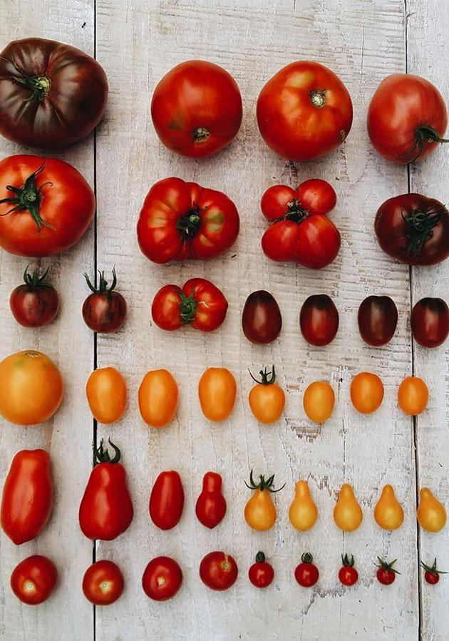Store tomatoes in a bowl under the window. Photo: Getty Images