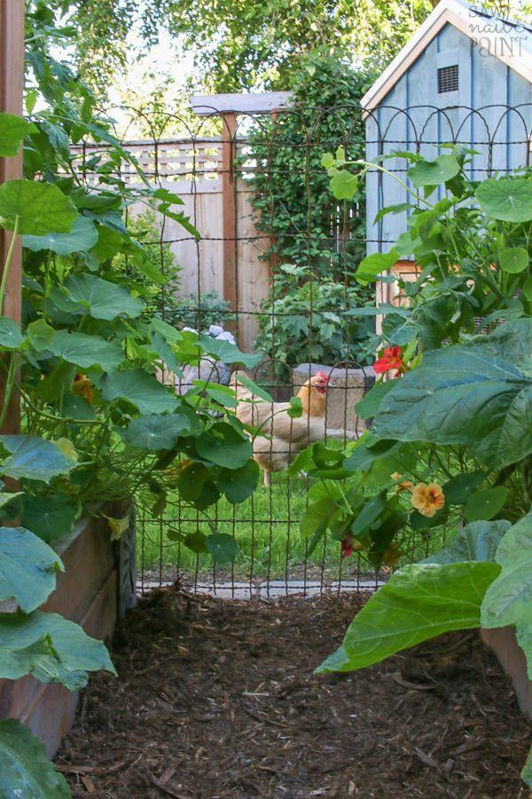 "<p>A roll of vintage wire fencing, found at an architectural salvage shop, created this charming fence. It does the job of keeping the hens out of the planting beds and looks great.</p><p><strong>Get the tutorial at <a href=""http://www.sawnailandpaint.com/2017/06/23/6065/"" rel=""nofollow noopener"" target=""_blank"" data-ylk=""slk:Saw, Nail & Paint"" class=""link rapid-noclick-resp"">Saw, Nail & Paint</a>. </strong></p><p><a class=""link rapid-noclick-resp"" href=""https://www.amazon.com/MTB-Coated-Decorative-Garden-Folding/dp/B01N75IVCZ/?tag=syn-yahoo-20&ascsubtag=%5Bartid%7C2164.g.32651791%5Bsrc%7Cyahoo-us"" rel=""nofollow noopener"" target=""_blank"" data-ylk=""slk:SHOP DECORATIVE WIRE FENCE PANELS"">SHOP DECORATIVE WIRE FENCE PANELS</a></p>"