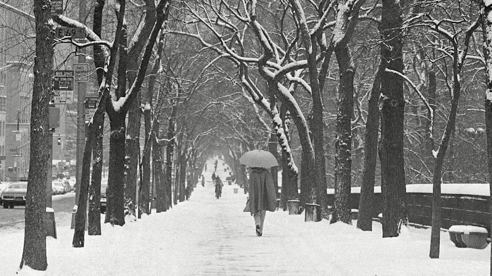 A woman uses her umbrella to ward off the snow as she walks down New York's Fifth Avenue under a canopy of snow-decorated trees, . Three inches of snow had fallen on the city by noon after months of unseasonably warm temperatures Winter Wonderland, New York, USA