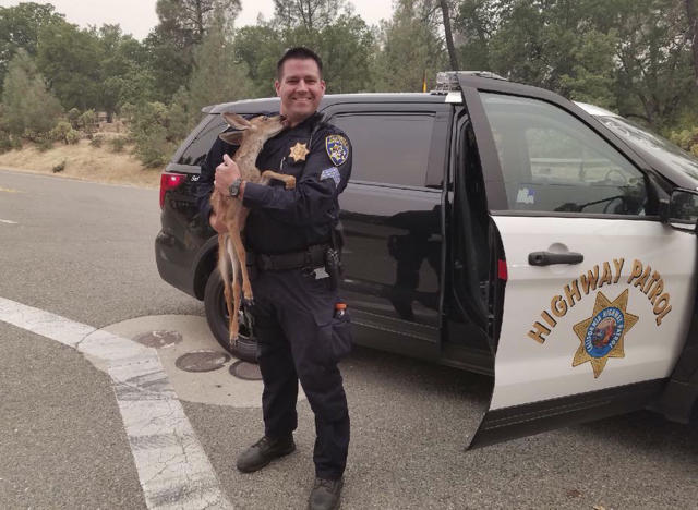 <p>In this photo released July 28, 2018, by the California Highway Patrol, Sergeant David Fawson holds a month-old fawn that was located by Cal Fire without a mother inside the Carr Fire line near Redding, Calif. Sawson evacuated the deer to safety for care with a wildlife rescue. Some evacuations orders have been lifted around a Northern California wildfire area near the city of Redding. The California Department of Forestry and Fire Protection said people can return to several neighborhoods in western Redding as of Monday morning. The huge blaze near Redding has displaced 38,000 from their homes and killed six people. (Photo: California Highway Patrol via AP) </p>