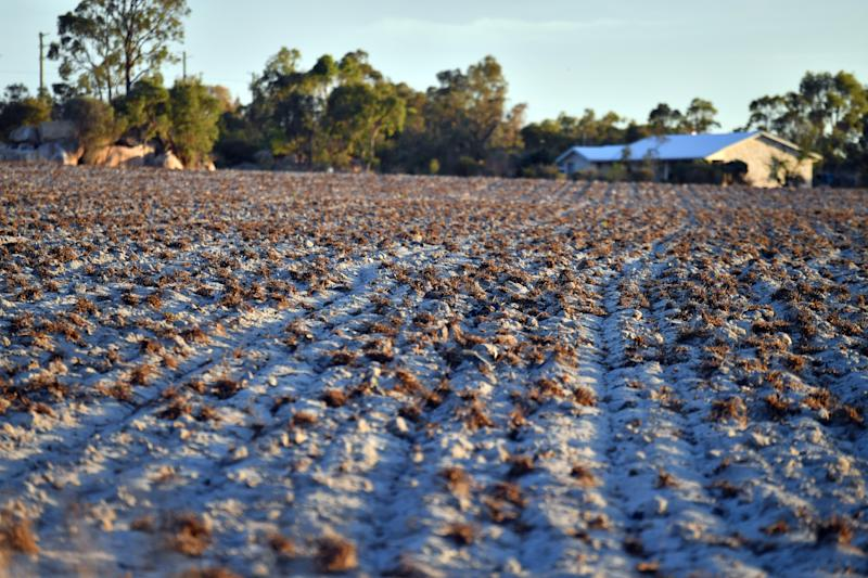 Drought-stricken land in border town Stanthorpe. Source: AAP