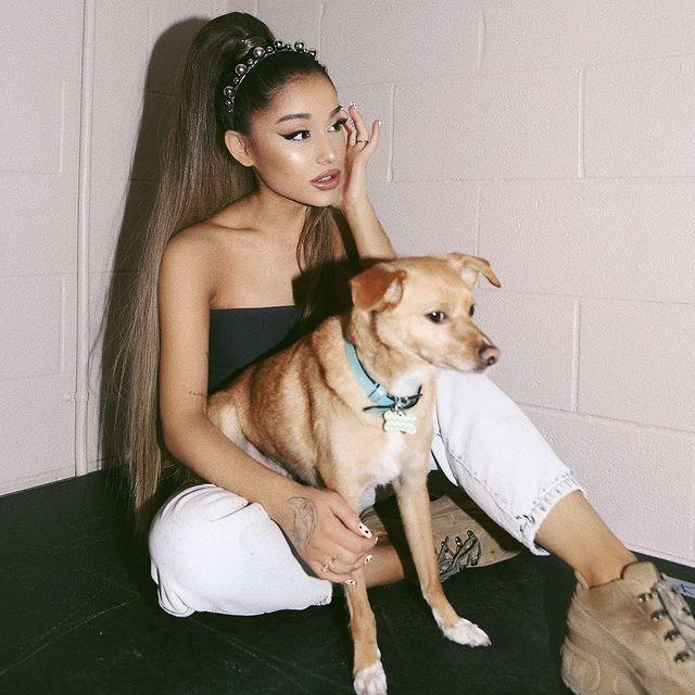 """<p>The 'No More Tears Left To Cry' singer is also a proud owner to her beagle-chihuahua mix breed Toulouse, who she adopted in 2013 saying: 'I wanted him so bad and now he's mine, my heart is so full.' </p><p><a href=""""https://www.instagram.com/p/BxvsenlFPWU/"""" rel=""""nofollow noopener"""" target=""""_blank"""" data-ylk=""""slk:See the original post on Instagram"""" class=""""link rapid-noclick-resp"""">See the original post on Instagram</a></p>"""