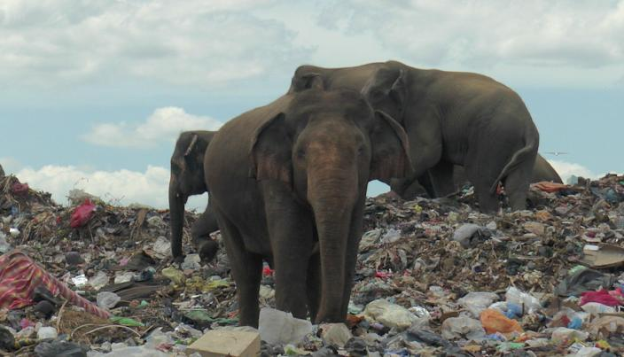 <p>A decade old Ampara landfill was created between an elephant corridor</p> (REUTERS)