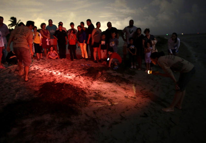 In this Friday, July 19, 2013 photo, naturalist Daphne Dozo, right, holds a flashlight as visitors watch the release of sea turtle hatchlings during the Sea Turtle Awareness Program at the Biscayne Nature Center in Key Biscayne, Fla. Nesting season on Florida's Atlantic coast runs from March through October. (AP Photo/Lynne Sladky)