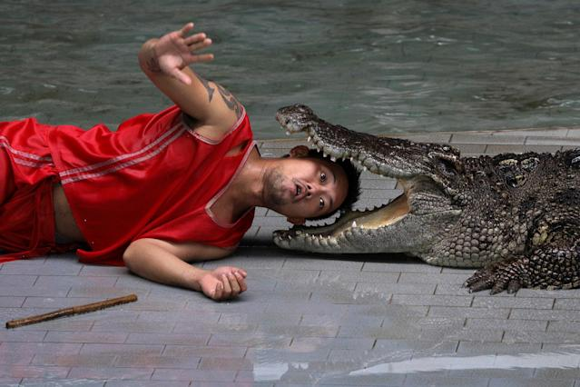 <p>A zoo performer reacts as he puts his head between the jaws of a crocodile during a performance for tourists at Sriracha Tiger Zoo, in Chonburi province, Thailand, May 16, 2017. (Photo: Athit Perawongmetha/Reuters) </p>