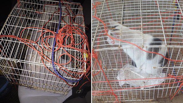 The cat was found in a cage bound by rope in a Melbourne park. Source: Facebook/ Western Suburbs Cat & Kitten Rescue