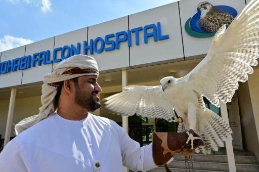 The Abu Dhabi falcon hospital is the world's largest such facility for birds of prey