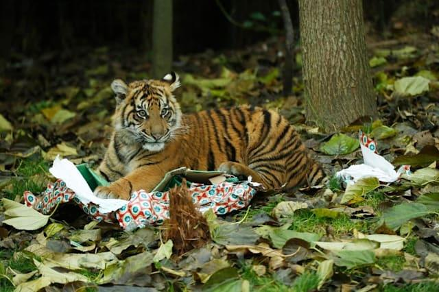 Animals enjoy Christmas at London Zoo