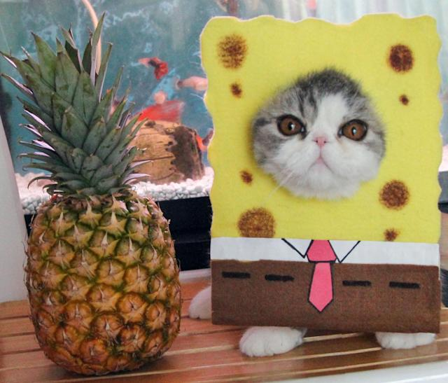 <p>SpongeBob SquareCat and a pineapple, why not? Snoopy and Doby love nothing more than being dressed up by their owner, Shirley Cheung, 28. (Photo: DailySnoopy/Caters News) </p>