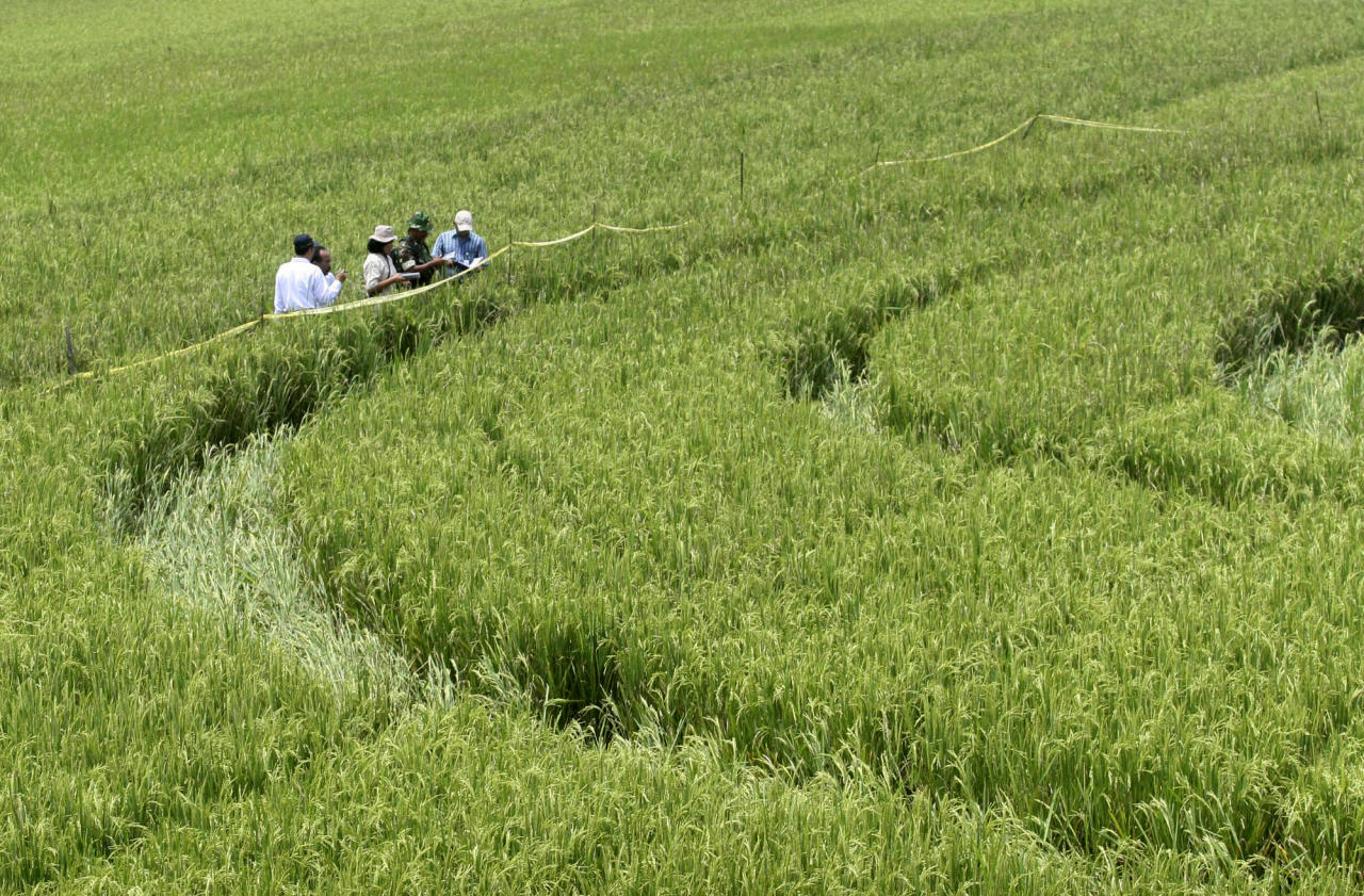 Investigators inspect the 70-meter-wide (70-yard-wide) crop circle that appeared over the weekend in a rice field in Sleman, Yogyakarta, Indonesia, Tuesday, Jan. 25, 2011. Thousands of curious onlookers are flocking to central Indonesia to look at the facture which looks like an intricately designed flower following rumors it was formed by a UFO. (AP Photo)