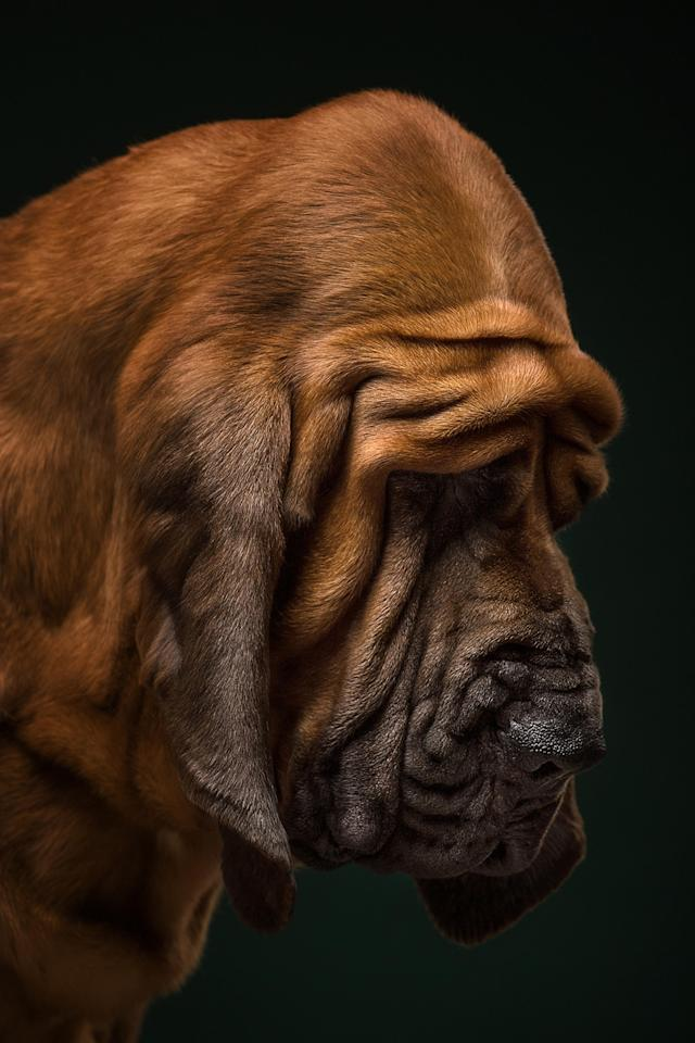 <p>They make sure the details of each breed can be seen in the final work, from hair to wrinkles. (Photo: Alexander Khokhlov-Veronica Ershova/Caters News) </p>