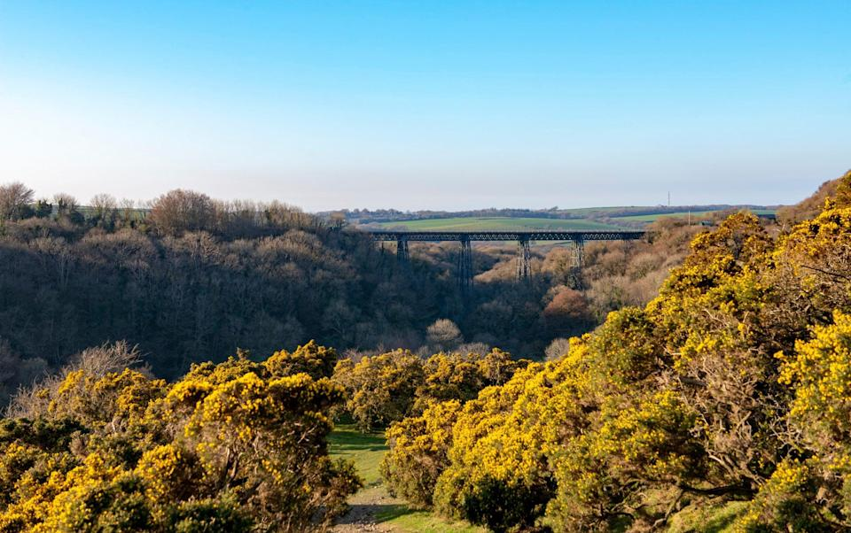 Gorse bushes on Dartmoor with Meldon Viaduct in the distance - Zoblinski/Getty