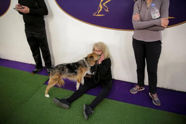Drew, an Australian shepherd dog, kisses its owner, Hellen Halperin of New Jersey after taking part in the Masters Agility Championship during the Westminster Kennel Club Dog Show in New York