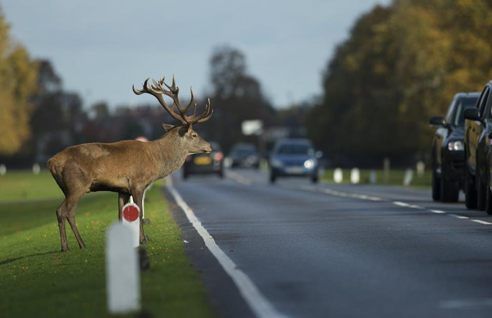 "<span class=""caption"">An estimated 29 million mammals are killed each year on European roads.</span> <span class=""attribution""><span class=""source"">(Shutterstock)</span></span>"