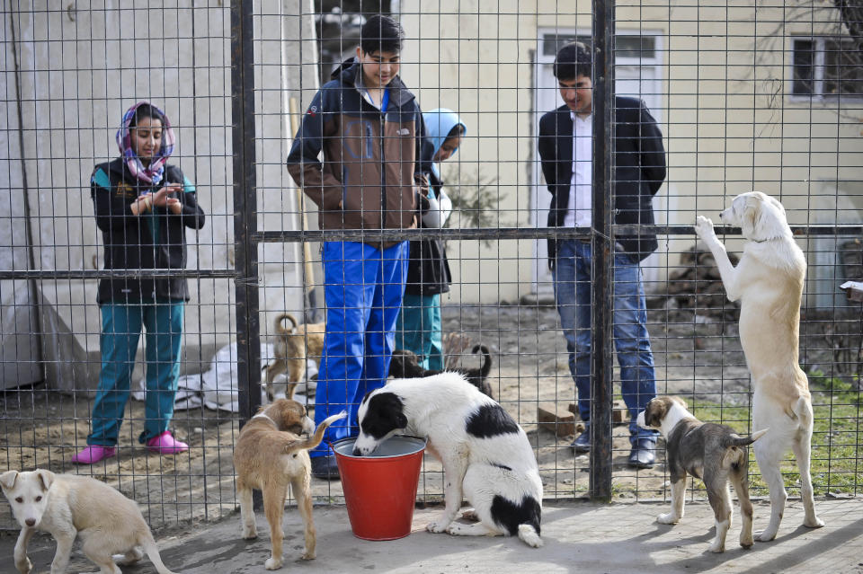 Previously unreleased image dated 12/03/14 of Puppies that been rescued and are looking to be re-homed inside the kennels at the Nowzad Dogs charity based in Kabul, Afghanistan, a British charity set up by former Royal Marine Sergeant Pen Farthing in 2007.