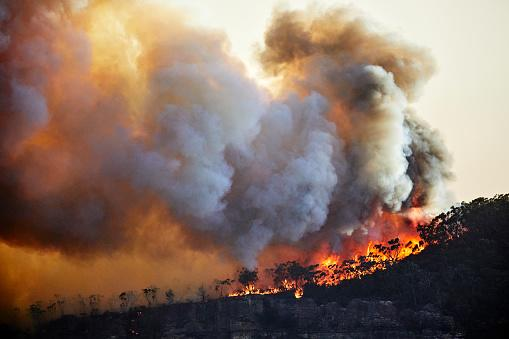 Australia wildfires/Getty Images