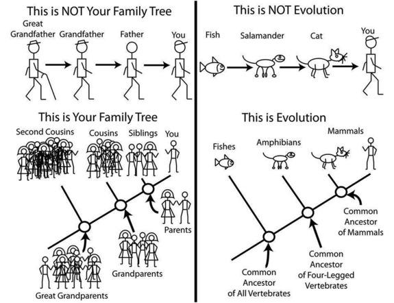 "People who disbelieve evolution often take offense to the idea than ""man came from a monkey."" The reality of the evolutionary tree is a bit more complex."