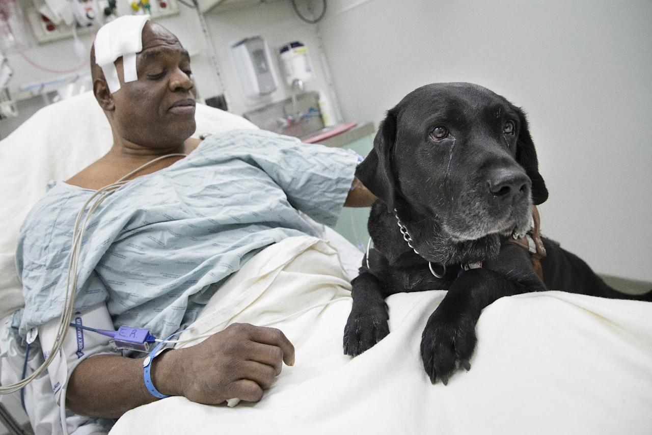 Cecil Williams pets his guide dog Orlando in his hospital bed following a fall onto subway tracks from the platform at 145th Street, Tuesday, Dec. 17, 2013, in New York. Williams, 61 and blind, says he fainted while holding onto his black labrador who tried to save him from falling. (AP Photo/John Minchillo)