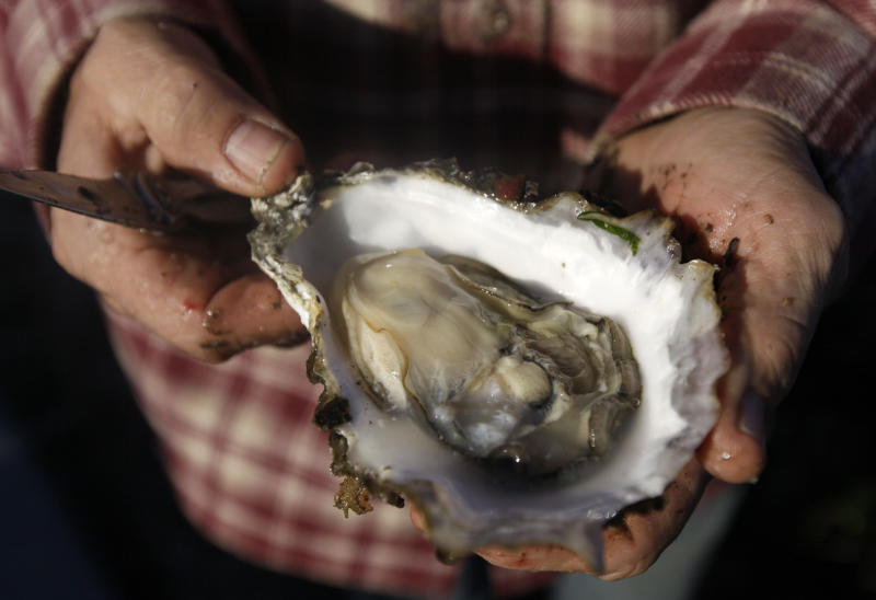 FILE- In this Dec. 6, 2011, file, photo, owner Kevin Lunny holds a Pacific oyster at the Drake's Bay Oyster Co. in Point Reyes National Seashore, Calif. Scientists blame higher levels of carbon dioxide in Pacific Ocean waters caused by man-made global warming for the failure of oysters to produce young at an Oregon hatchery. (AP Photo/Eric Risberg, File)