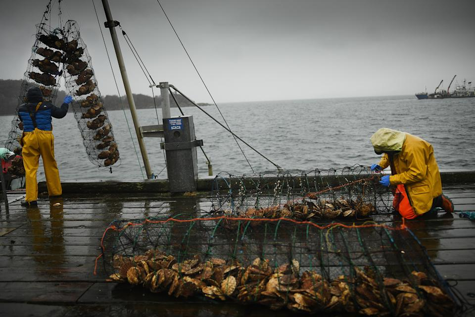 TARBERT, SCOTLAND - JANUARY 13: Fishermen move clams at the harbour on January 13, 2021 in Tarbert, Scotland. The Scottish Fishing industry says it is losing £1 million per day post-Brexit as EU customers are cancelling orders. Hauliers are refusing to take multi-product loads to Europe where they have been held for hours losing valuable miles.  Hauliers are paid by the mile not the length of time a job takes. (Photo by Jeff J Mitchell/Getty Images)