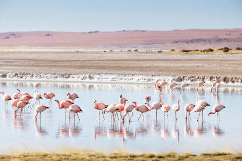 Flamingos, one of Chile's more exotic wildlife offerings - Credit: Getty