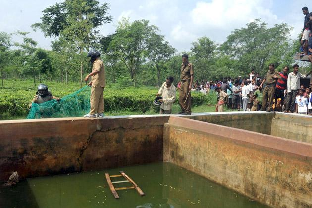 Onlookers watch Indian forest guards preparing to throw a net into a water reservoir tank that a fully grown male wild leopard fell into at a tea estate in Haskhowa, some 45 kms from Siliguri, on June 20, 2012. The animal was rescued by the Sukna Forest rescue team from the Mahananda Wildlife sanctuary by lowering a ladder and a net into the tank. AFP PHOTO/Diptendu DUTTA