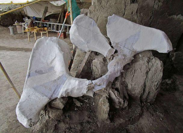 PHOTO: Mammoth bones found in what is believed to be the first mammoth trap set by humans, in Tultepec, Mexico, in a photo released by Mexico's National Institute of Anthropology (INAH). (INAH via AFP/Getty Images)