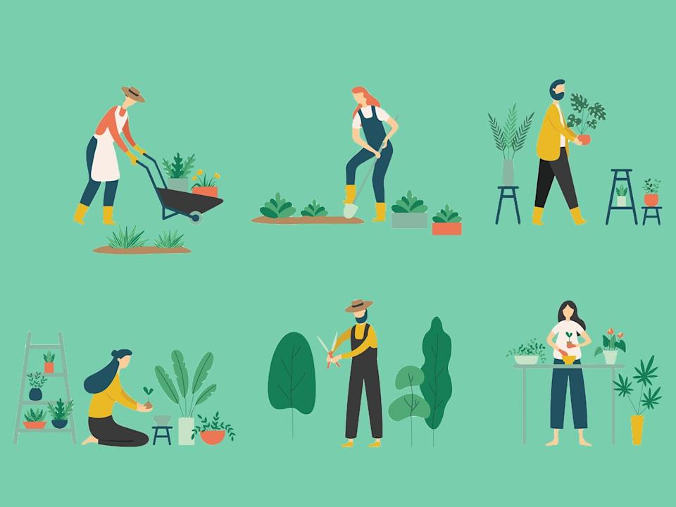 Gardening can be a rewarding hobby, so if you're new to it, these are the tools, seeds, bulbs and books you need (iStock)