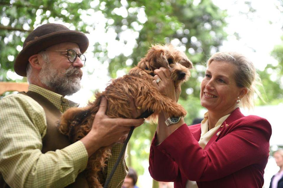 <p>Sophie, Countess of Wessex meets Gilpin the Norfolk Terrier, during her visit to the Royal Norfolk Show.</p>