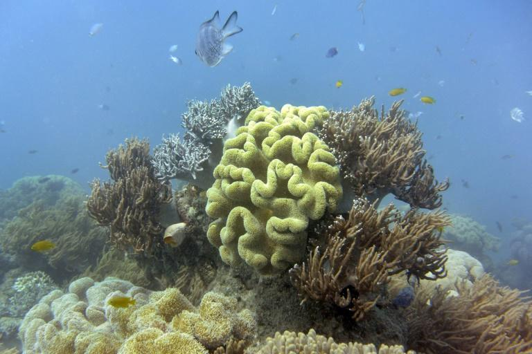 Authorities say coral bleaching is worsening