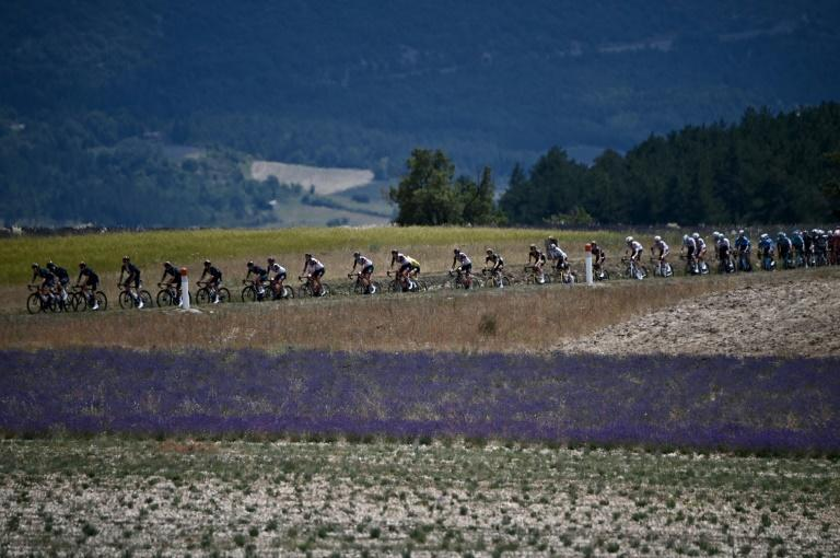Postcard from summer: the Tour rides through fields of lavender on a hot Provencal day